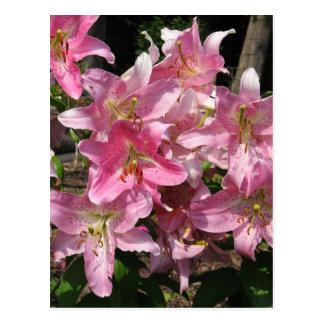 Cartão Postal Lírios cor-de-rosa bonitos