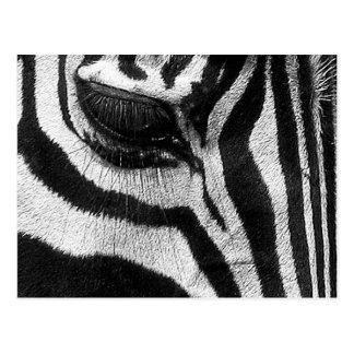Cartão Postal Listras da zebra