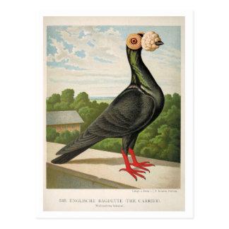 Cartão Postal Litho antigo do pombo que grava o portador