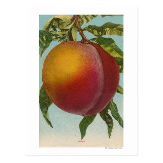 Cartão Postal Litografia de Chromo da fruta de PeachFruitState