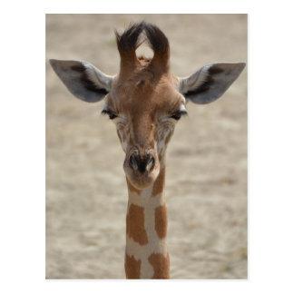 Cartão Postal Little girafa