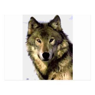 Cartão Postal Lobo cinzento