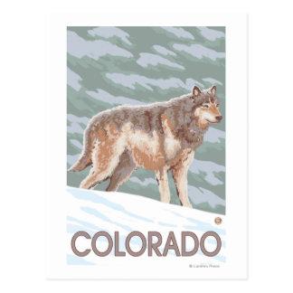 Cartão Postal Lobo cinzento StandingColorado