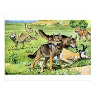 Cartão Postal lobo e chacal