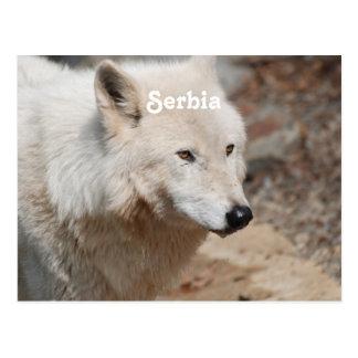 Cartão Postal Lobo sérvio