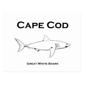 Cartão Postal Logotipo do tubarão branco de Cape Cod