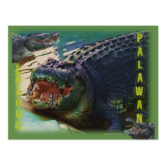 """Cartão Postal Lolong - """"o crocodilo o maior nunca Captived """""""