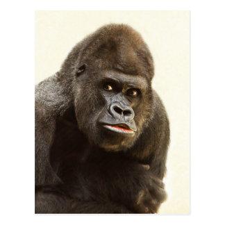 Cartão Postal Lota do gorila