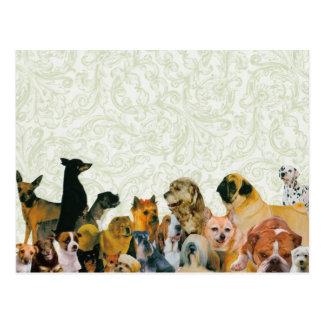 Cartão Postal Lotes do poster da colagem dos cães