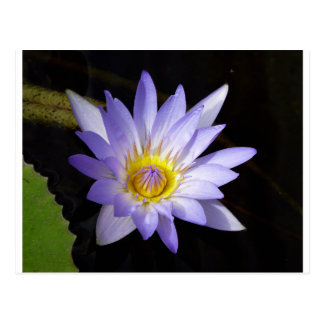 Cartão Postal lotus azul Nil