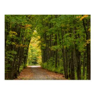 Cartão Postal Luz na extremidade de um túnel das árvores
