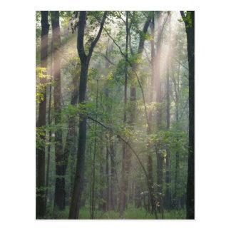 Cartão Postal Luz solar com Forrest
