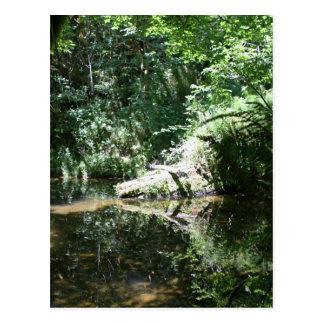 Cartão Postal Luz solar da tarde no rio dos alces em montante