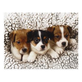 Cartão Postal Maca dos filhotes de cachorro