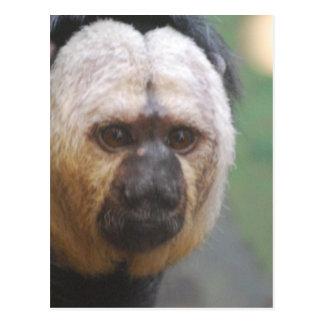 Cartão Postal Macaco bonito de Saki