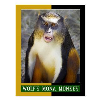 Cartão Postal Macaco da Mona do lobo (Guenon)