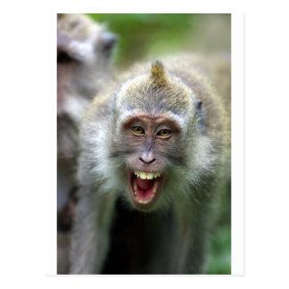Cartão Postal Macaco de Macaque