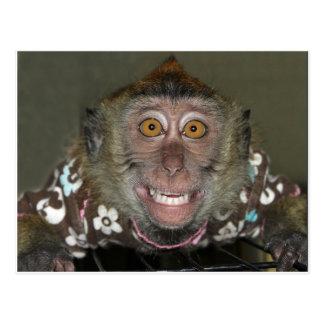 Cartão Postal Macaco de sorriso