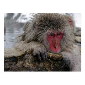 Cartão Postal Macaco japonês que relaxa no primavera quente