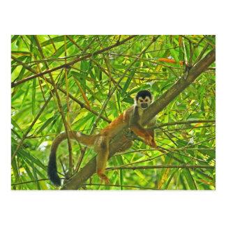 Cartão Postal Macaco na selva de bambu
