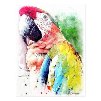 Cartão Postal Macaw