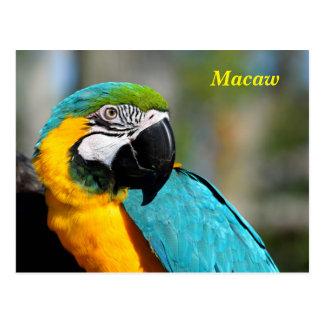 Cartão Postal Macaw vibrante da cor