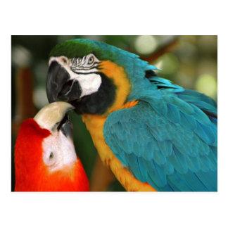 Cartão Postal Macaws