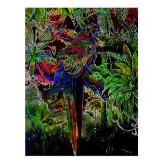 Cartão Postal Macaws no paraíso tropical na noite