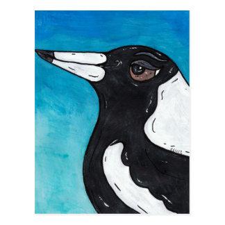 Cartão Postal Macca o Magpie