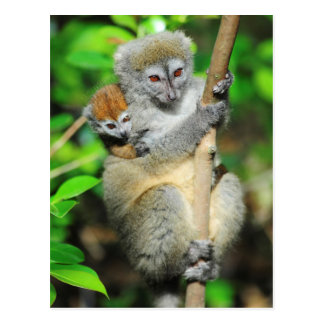 Cartão Postal Madagascar, Andasibe, Ile Lemuriens auxiliar, mãe