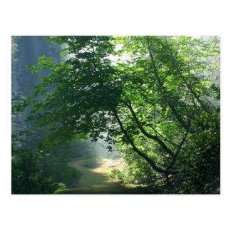 Cartão Postal Madeiras das florestas das fugas dos trajetos de