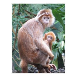 Cartão Postal Mãe & bebê do macaco do Langur