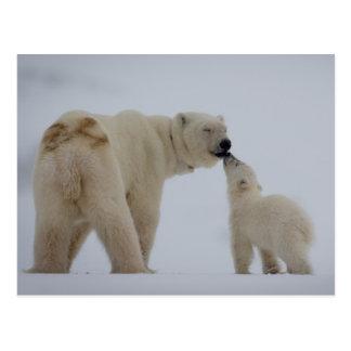 Cartão Postal Mãe do urso polar com filhote