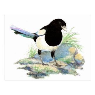 Cartão Postal Magpie bonito - pássaro da aguarela
