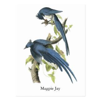 Cartão Postal Magpie Jay, John Audubon