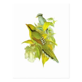 Cartão Postal Magpie verde comum