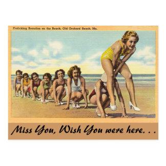 Cartão Postal Maine, belezas Frolicking