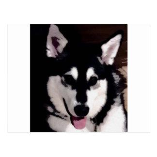 Cartão Postal Malamute do Alasca de sorriso preto e branco