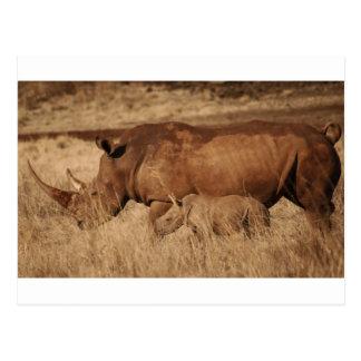 Cartão Postal Mamã e bebê africanos do rinoceronte