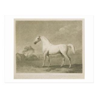 Cartão Postal Mambrino, após George Stubbs, 1788 (mezzotint)