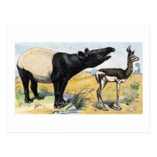 Cartão Postal Mamíferos:  tapir & gazela