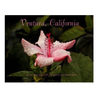Cartão Postal Manhã Hibiscus-Ventura