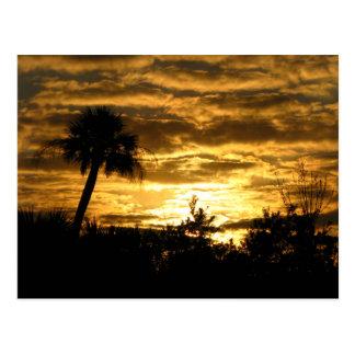 Cartão Postal Manhã II dos pantanais