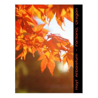 Cartão Postal Manhã obscura do outono