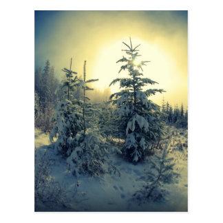 Cartão Postal Manhã torrada do inverno