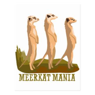 Cartão Postal Mania de Meerkat