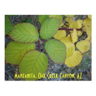 Cartão Postal Manzanita, garganta da angra do carvalho, AZ