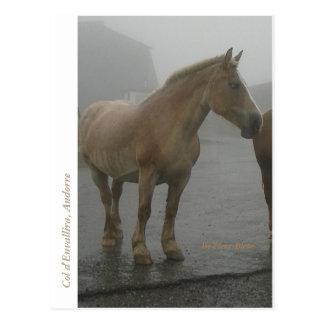 Cartão Postal Mapa postal cavalo sob a chuva
