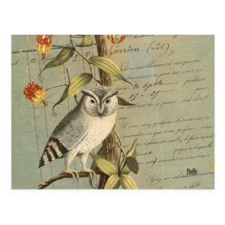Cartão Postal Mapa postal coruja