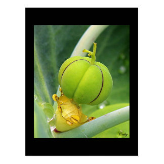 """Cartão Postal Mapa postal """"o fruto da erva à toupeira """""""